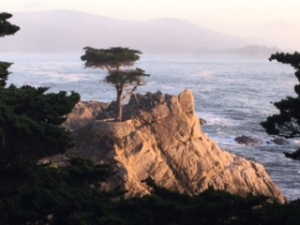 The lone cypress on the 17 Mile Drive near Carmel